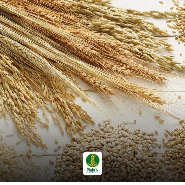 Fornecedores de cereais integrais