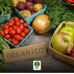 Fabricantes de produtos orgânicos