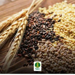 Distribuidor de cereais integrais